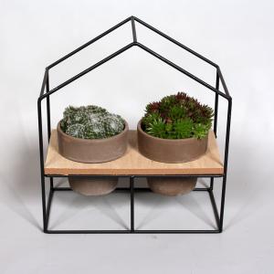 Evergreen rockyplants duo open huis